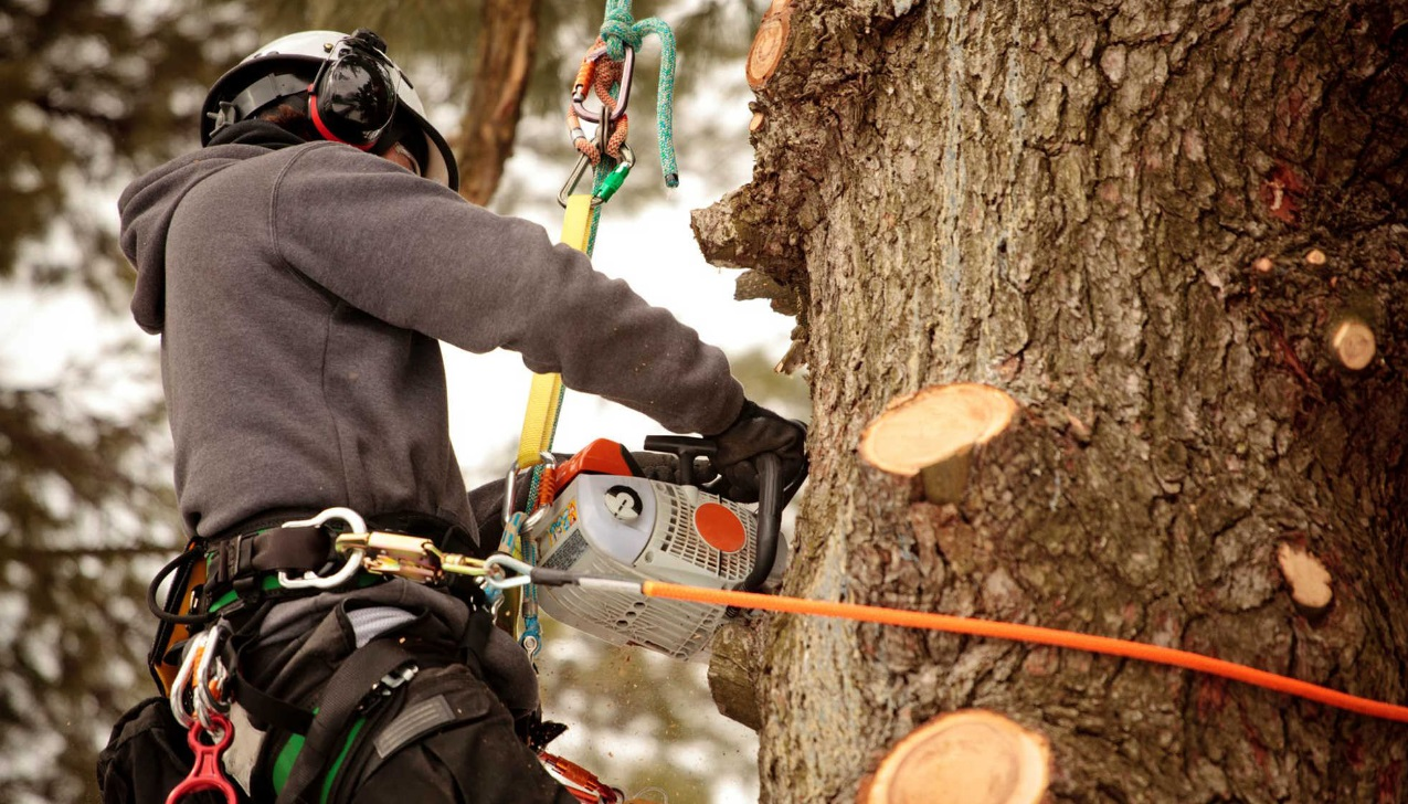 Don't get robbed on tree removal price with these tips